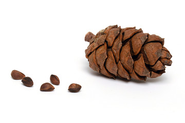 Cedar cone with pine nuts isolated on white background
