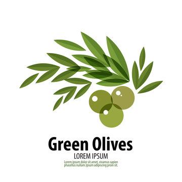 Green Olives vector logo design template. harvest or food icon.