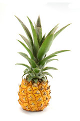 ananas victoria