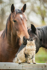 Wall Mural - Friendship of cat and horse