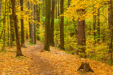 Walk along the path in the autumn forest