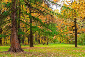 very beautiful autumn landscape of mixed forest