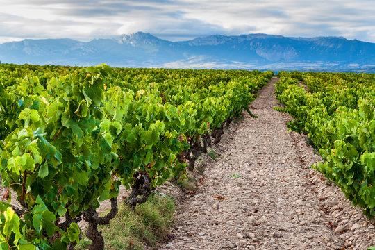 Vineyards near Logrono