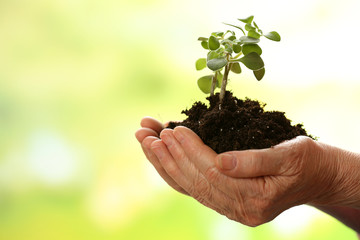 Hands of old woman and young plant on light background