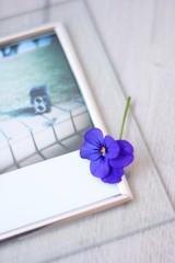 ビオラの花と写真