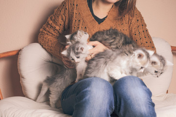 Kittens on knees