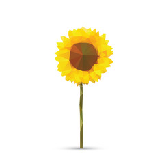Vector abstract sunflower abstract isolated on a white backgroun