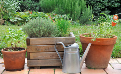 different herbs in pots
