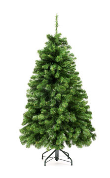 Bare undecorated green Christmas tree