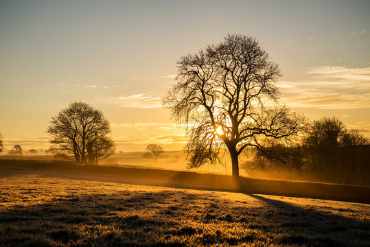 Sunrise in the fields cornwall, uk with tree silhouette