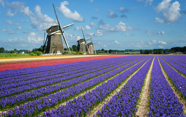 Flowers and windmills in Holland Wall mural