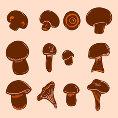 Set of different mushrooms2