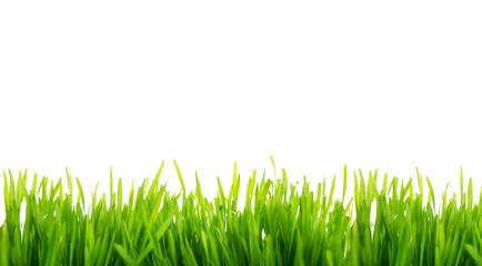 Wiese,Rasen Grün Freisteller