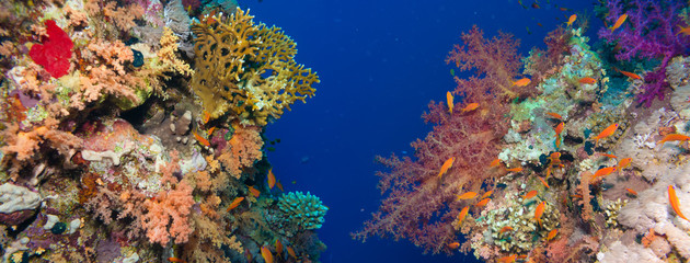 In de dag Onder water Colorful underwater reef with coral and sponges
