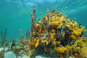 Multi colored sea sponges underwater in coral reef