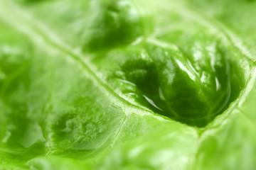 Lettuce, macro view Wall mural