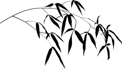 black bamboo single branch isolated on white