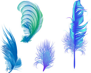 four blue feathers isolated on white