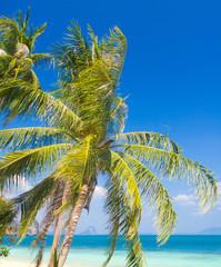 Coconut Coast Exotic Paradise