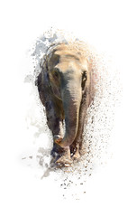 Portrait of an elephant, abstract animal concept