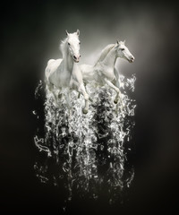 White horses, abstract animal concept on black background