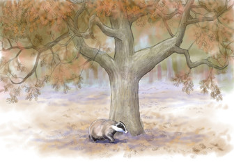 badger in autumn forest
