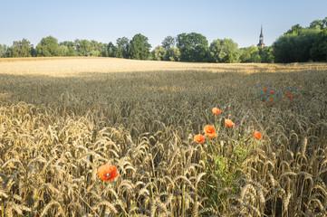 Obraz Wiosenne ukwiecone pole nieopodal wsi - fototapety do salonu
