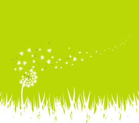 spring with dandelion background