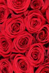 Hintergrund rote Rosen Blumen zum Geburtstag, Valentinstag oder