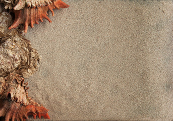 Sea shells and sand background horizontal view