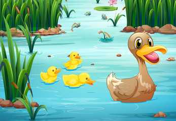 Ducks and pond