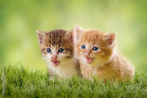 """""""zwei katzenbabys"""" stockfotos und lizenzfreie bilder auf"""