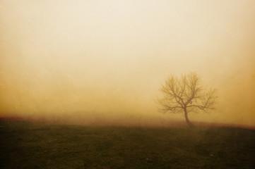 vintage lonely tree
