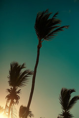 palms behind blue summer sunset sky