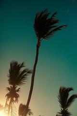 palms behind blue summer sunset sky