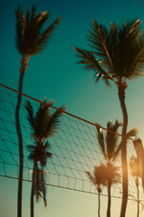 volleyball net on beach and palms behind blue summer sky