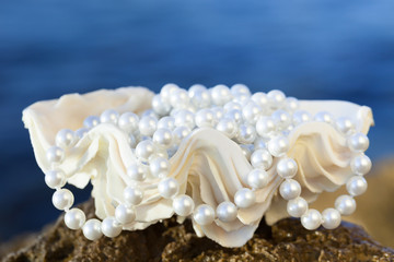 shell with white pearls, selective focus