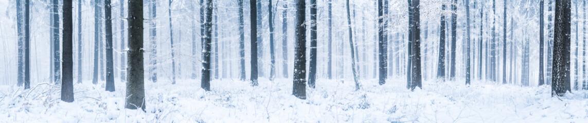 Winterwald Panorama