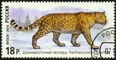 "RUSSIA - 2014: shows Amur leopard, series ""The Fauna Of Russia"""