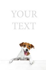 Beautiful dog  white background