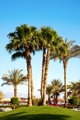 Palm trees in the garden