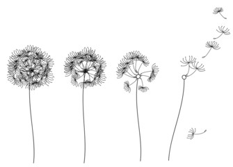 Vector abstract dandelions.