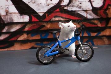 Le vélo et la souris