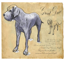 Great Dane (German Mastiff) - An hand drawn vector illustration