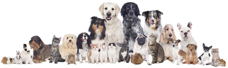 Haustiergruppe Fotobehang