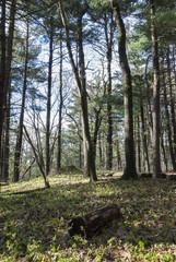 DSC_5489D80  Log In Woods ©2010