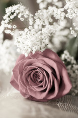 Red rose and white flowers