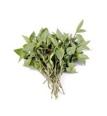 basil leaves on white background