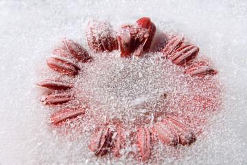 Frozen   flower of   Gerbera