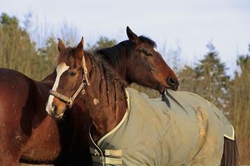 Pferd zieht an Decke